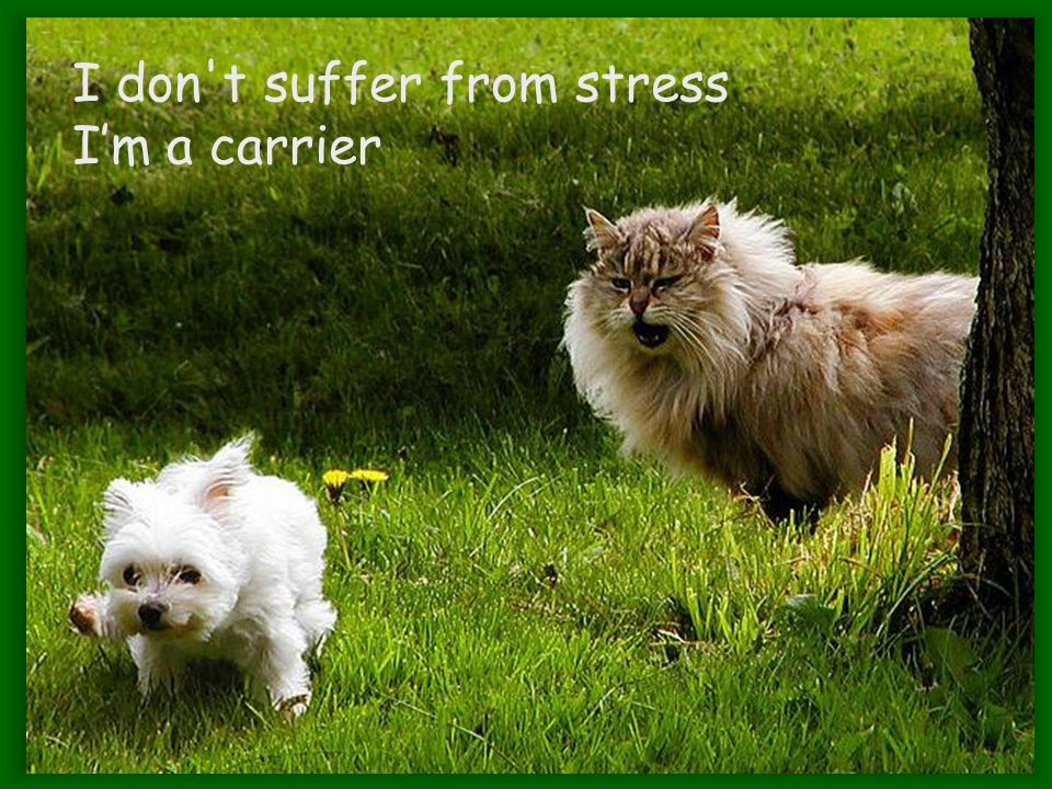 I don t suffer from stress I'm a carrier