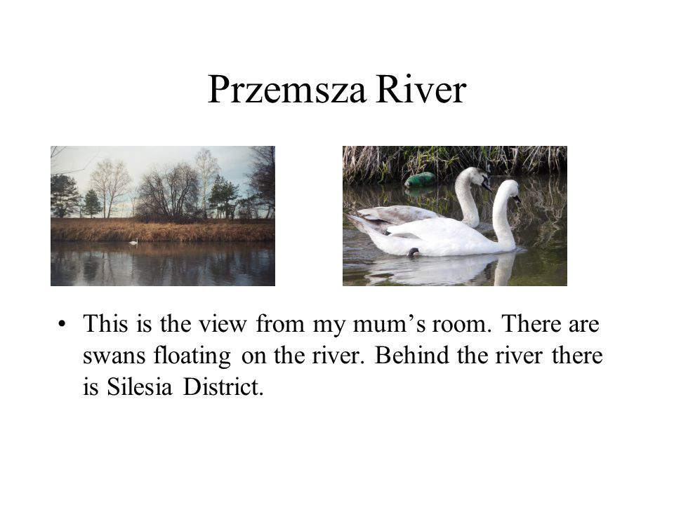 Przemsza River This is the view from my mum's room. There are swans floating on the river. Behind the river there is Silesia District.