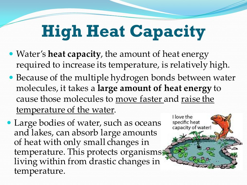 High Heat Capacity Water's heat capacity, the amount of heat energy required to increase its temperature, is relatively high. Because of the multiple
