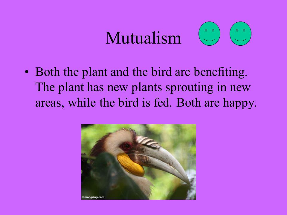 Mutualism Both the plant and the bird are benefiting.