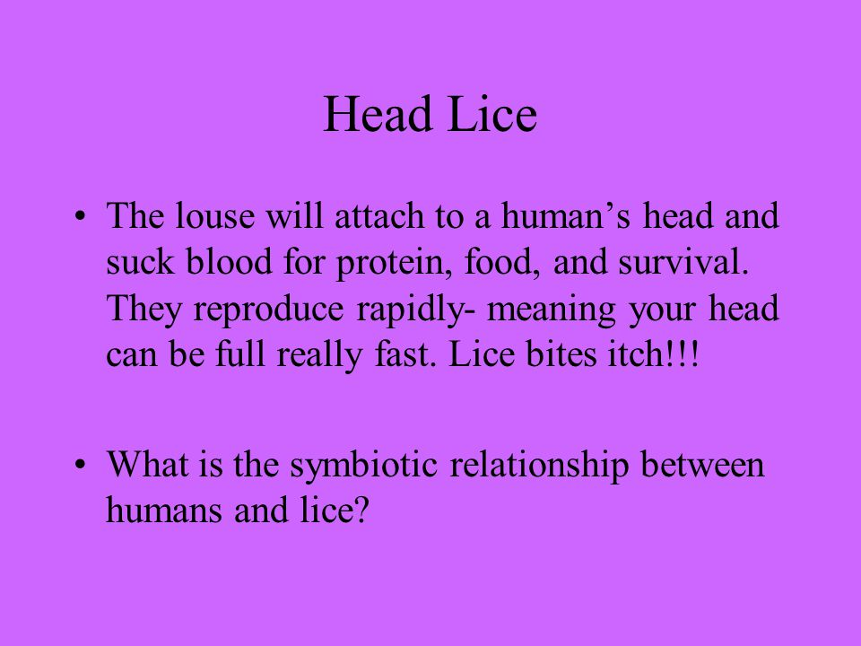 Head Lice The louse will attach to a human's head and suck blood for protein, food, and survival.