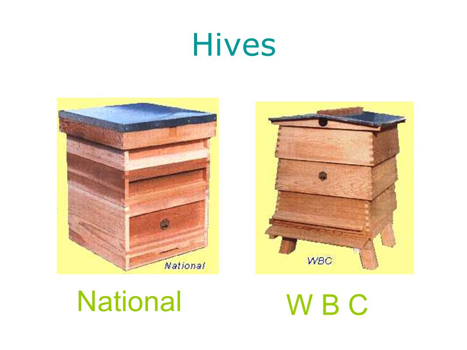 Hives National W B C