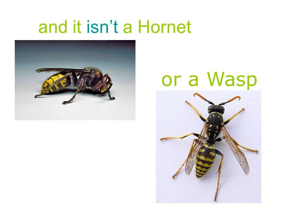 This is a Honeybee