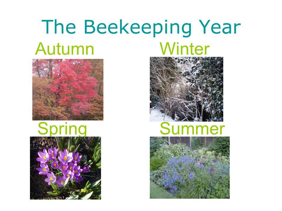 The Beekeeping Year AutumnWinter SpringSummer