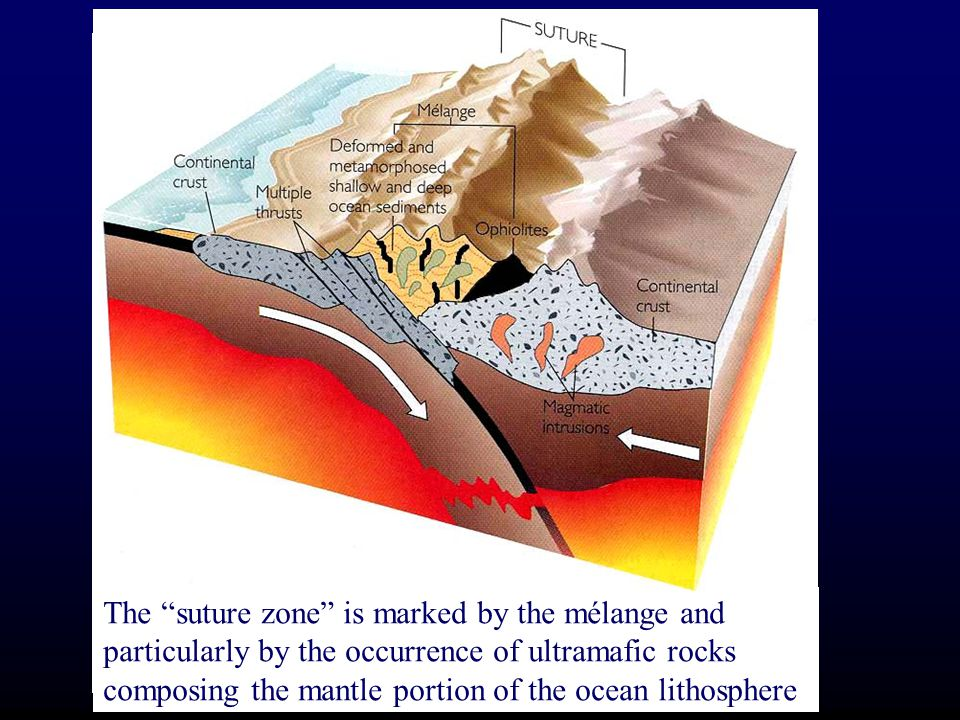 Slivers of oceanic crust and upper mantle (ophiolites) become incorporated into the mélange in the accretionary wedge of deformed sediments The suture zone is marked by the mélange and particularly by the occurrence of ultramafic rocks composing the mantle portion of the ocean lithosphere