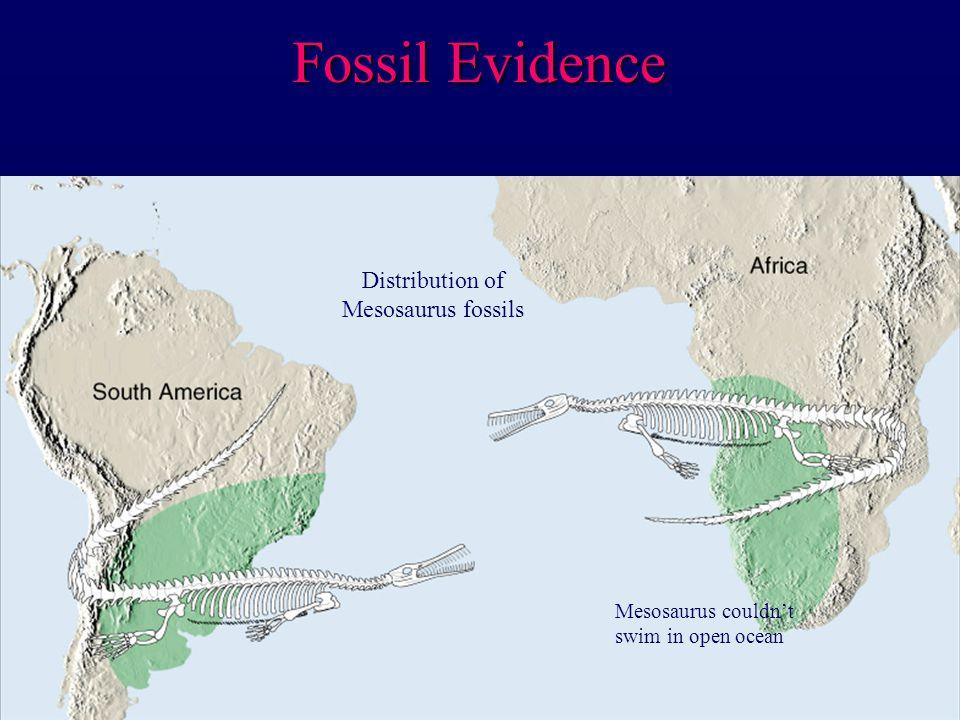 Fossil Evidence Mesosaurus couldn't swim in open ocean Distribution of Mesosaurus fossils