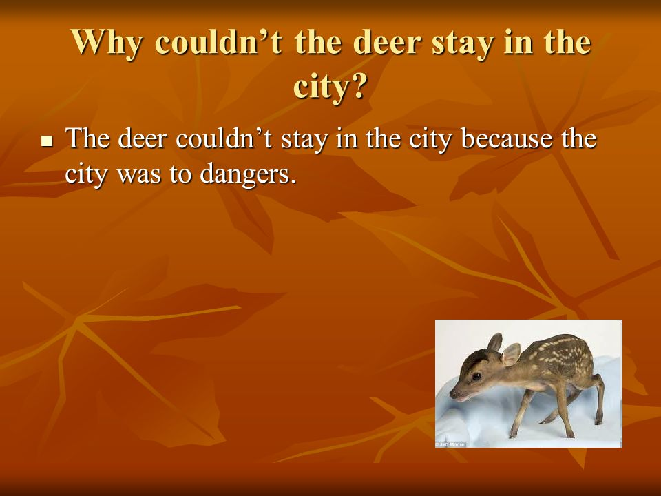 Why couldn't the deer stay in the city.