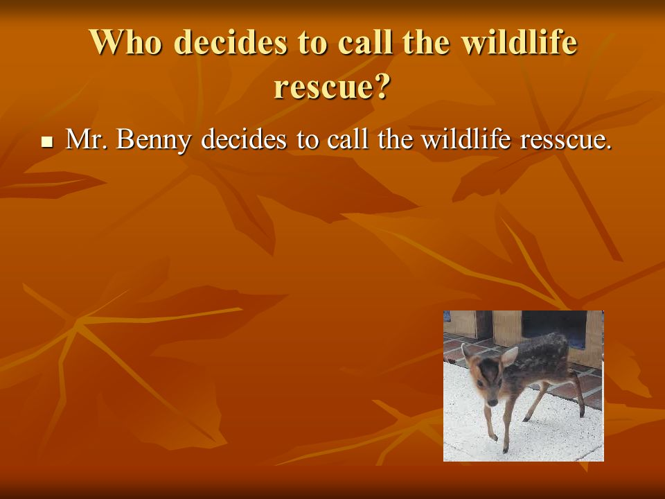 Who decides to call the wildlife rescue. Mr. Benny decides to call the wildlife resscue.