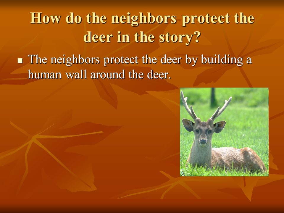 How do the neighbors protect the deer in the story.