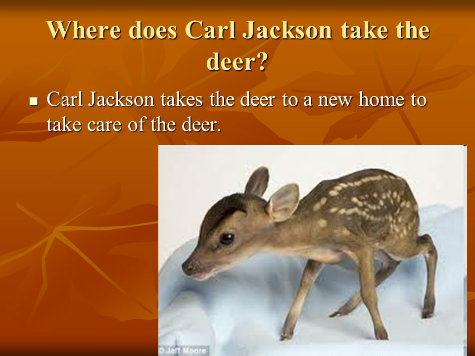 Where does Carl Jackson take the deer.