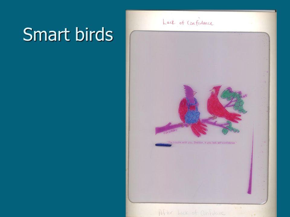 Smart birds Smart birds