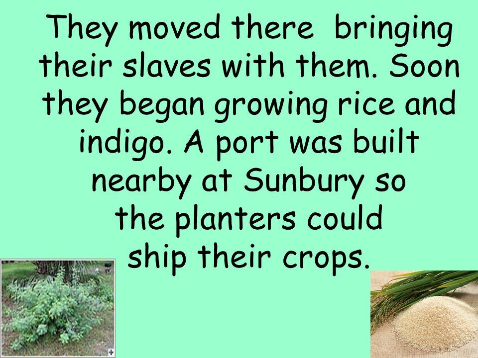 4 They moved there bringing their slaves with them. Soon they began growing rice and indigo. A port was built nearby at Sunbury so the planters could