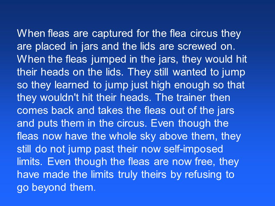 When fleas are captured for the flea circus they are placed in jars and the lids are screwed on. When the fleas jumped in the jars, they would hit the