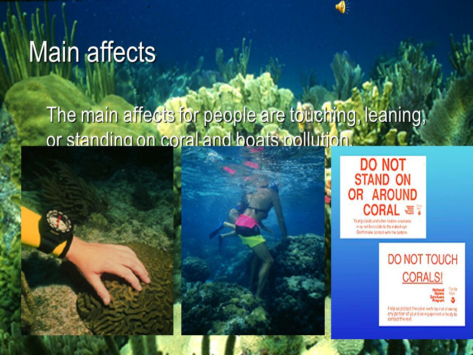 People's affects Careless snorkelers come break and damage corals by standing on or leaning against the reef. Even a light touch can destroy the anima