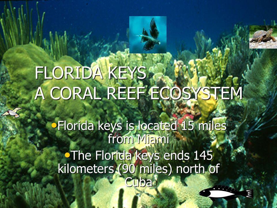 Welcome To To Florida keys Florida keys