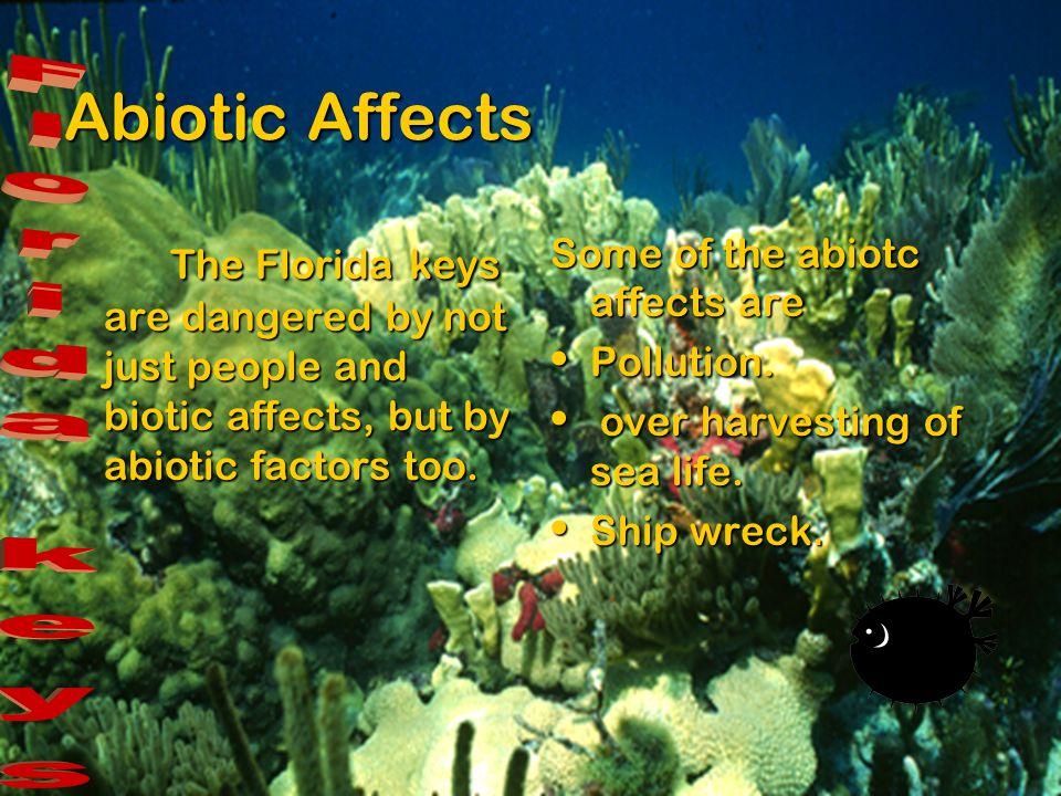 Florida keys Abiotic affects