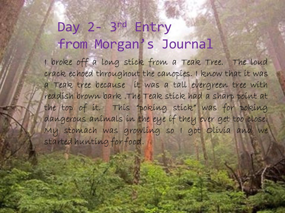 Day 2- 3 rd Entry from Morgan's Journal I broke off a long stick from a Teak Tree.