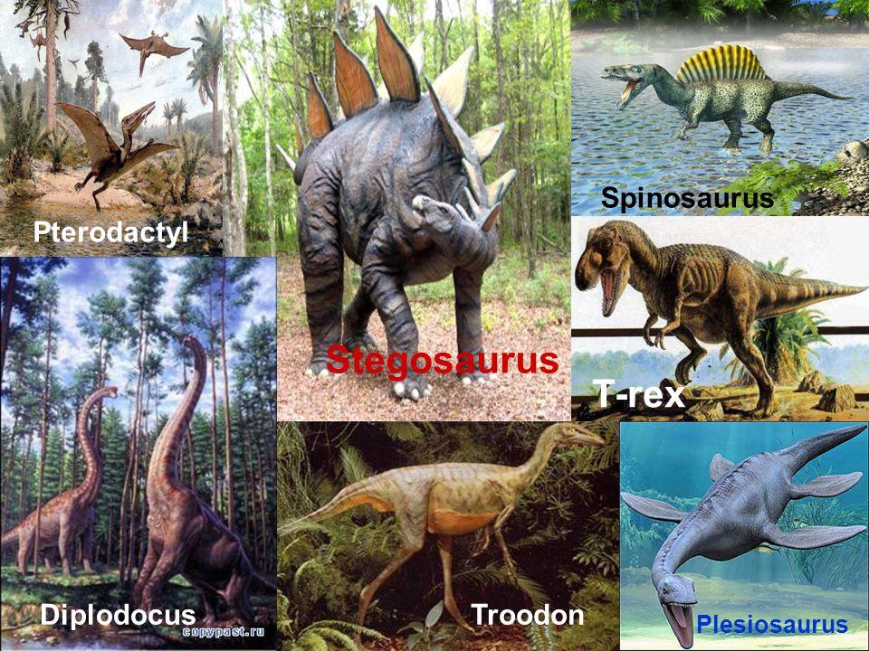 Stegosaurus Spinosaurus Pterodactyl DiplodocusTroodon T-rex Plesiosaurus