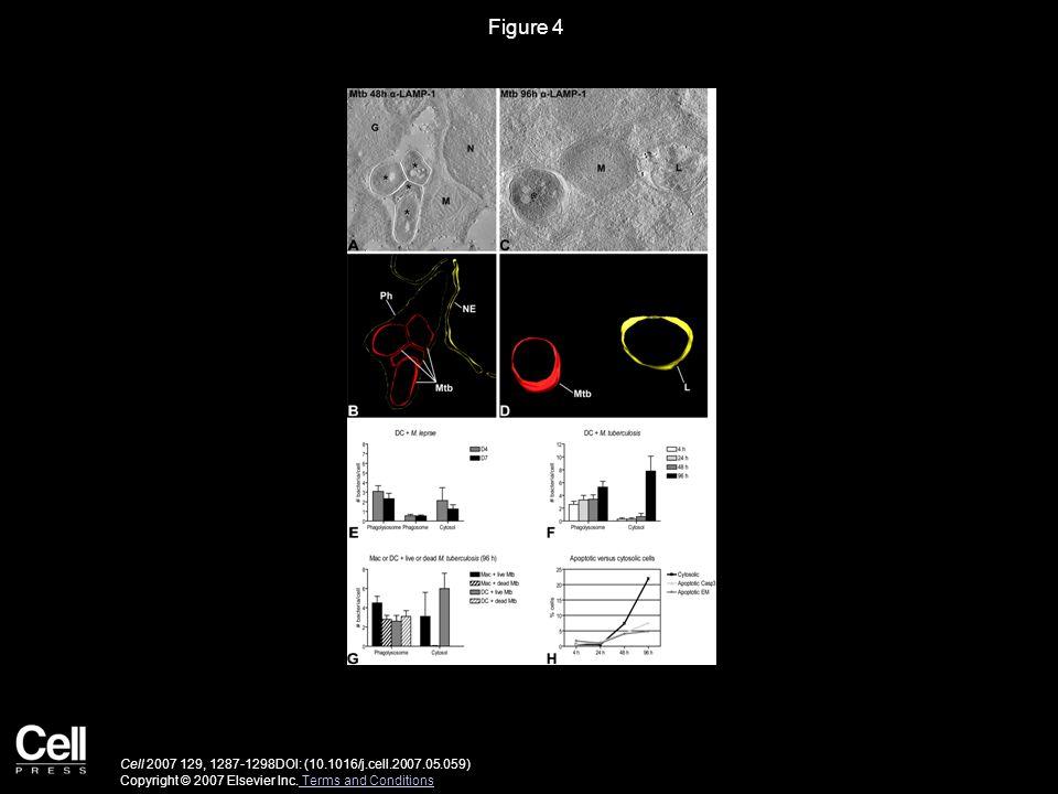 Figure 4 Cell 2007 129, 1287-1298DOI: (10.1016/j.cell.2007.05.059) Copyright © 2007 Elsevier Inc. Terms and Conditions Terms and Conditions