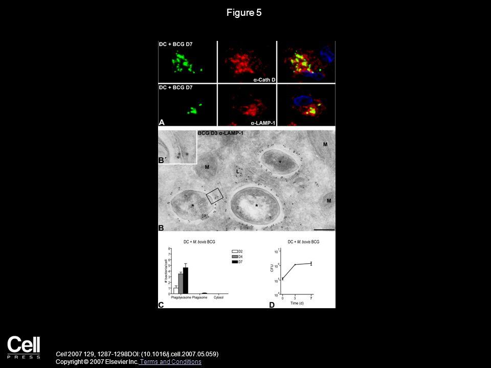 Figure 5 Cell 2007 129, 1287-1298DOI: (10.1016/j.cell.2007.05.059) Copyright © 2007 Elsevier Inc.