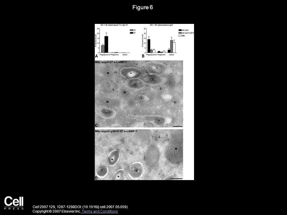Figure 6 Cell 2007 129, 1287-1298DOI: (10.1016/j.cell.2007.05.059) Copyright © 2007 Elsevier Inc. Terms and Conditions Terms and Conditions