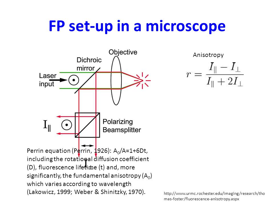FP set-up in a microscope http://www.urmc.rochester.edu/imaging/research/tho mas-foster/fluorescence-anisotropy.aspx Anisotropy Perrin equation (Perrin, 1926): A 0 /A=1+6Dt, including the rotational diffusion coefficient (D), fluorescence lifetime (t) and, more significantly, the fundamental anisotropy (A 0 ) which varies according to wavelength (Lakowicz, 1999; Weber & Shinitzky, 1970).