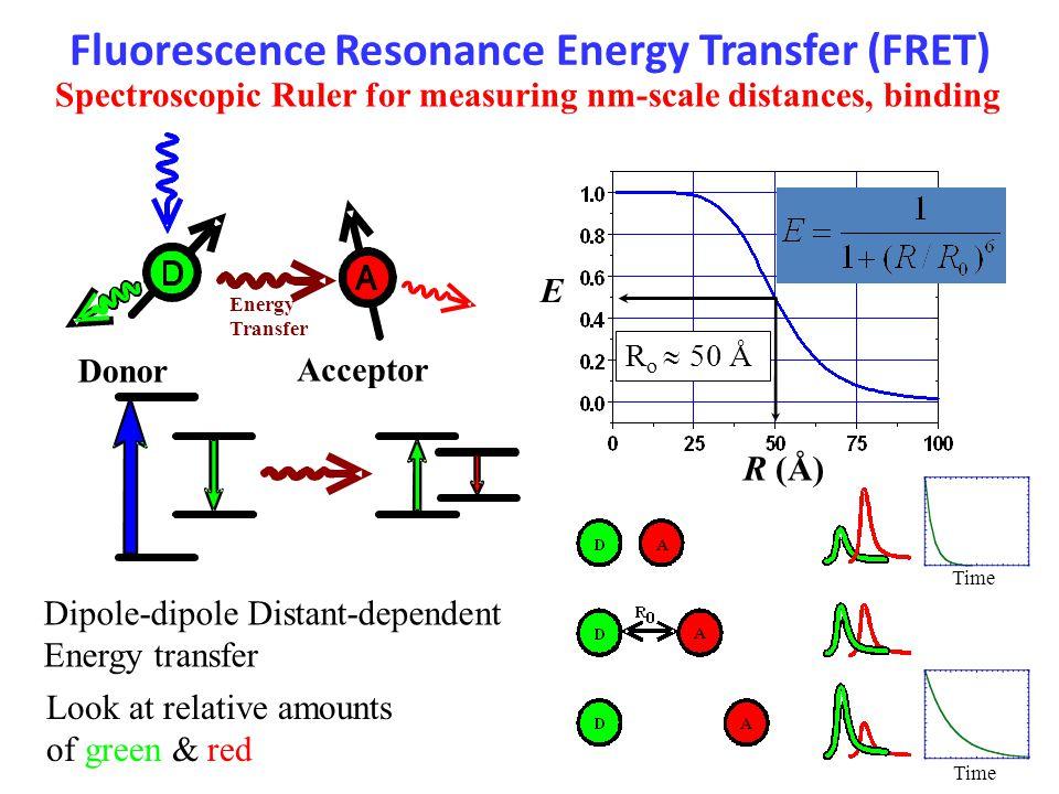 Fluorescence Resonance Energy Transfer (FRET) Energy Transfer Donor Acceptor Dipole-dipole Distant-dependent Energy transfer R (Å) E R o  50 Å Spectroscopic Ruler for measuring nm-scale distances, binding Time Look at relative amounts of green & red