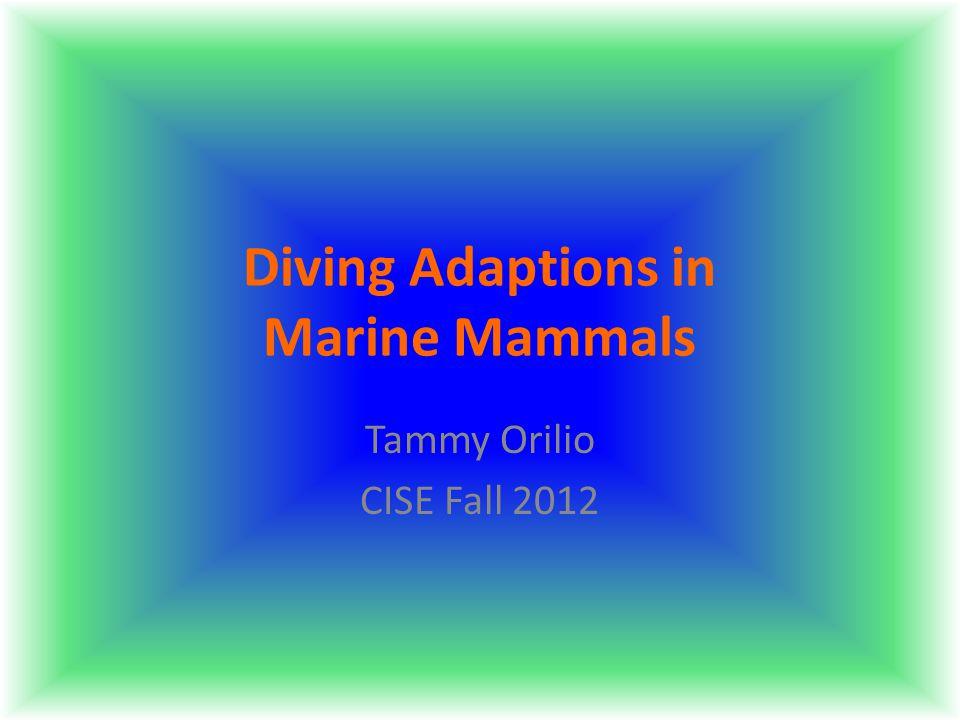 Diving Adaptions in Marine Mammals Tammy Orilio CISE Fall 2012