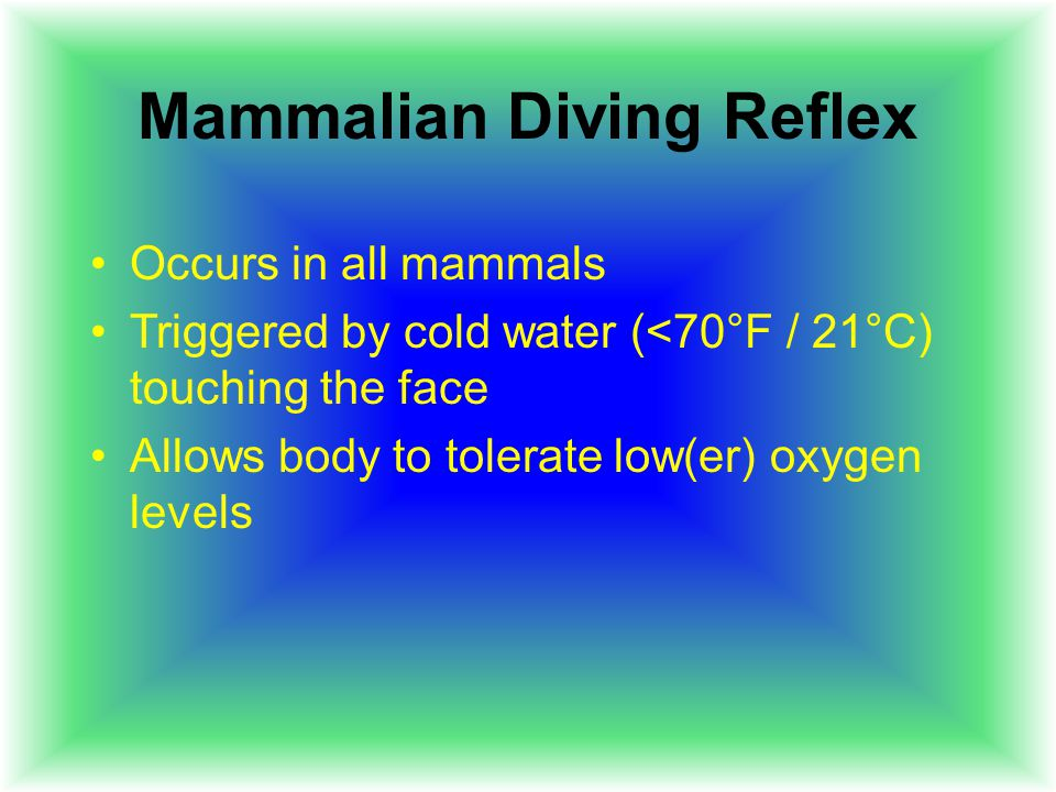 Mammalian Diving Reflex Occurs in all mammals Triggered by cold water (<70°F / 21°C) touching the face Allows body to tolerate low(er) oxygen levels