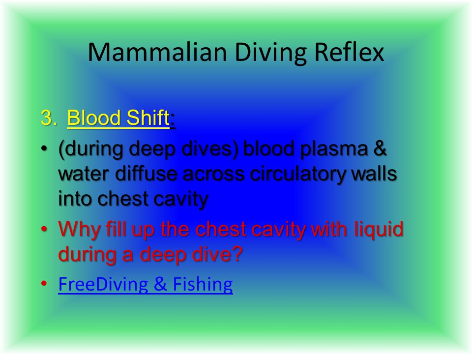 Mammalian Diving Reflex 3.Blood Shift: (during deep dives) blood plasma & water diffuse across circulatory walls into chest cavity(during deep dives)