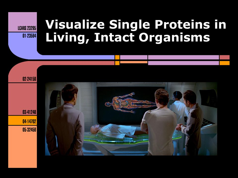 Visualize Single Proteins in Living, Intact Organisms