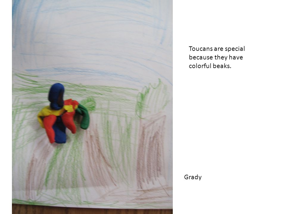Toucans are special because they have colorful beaks. Grady