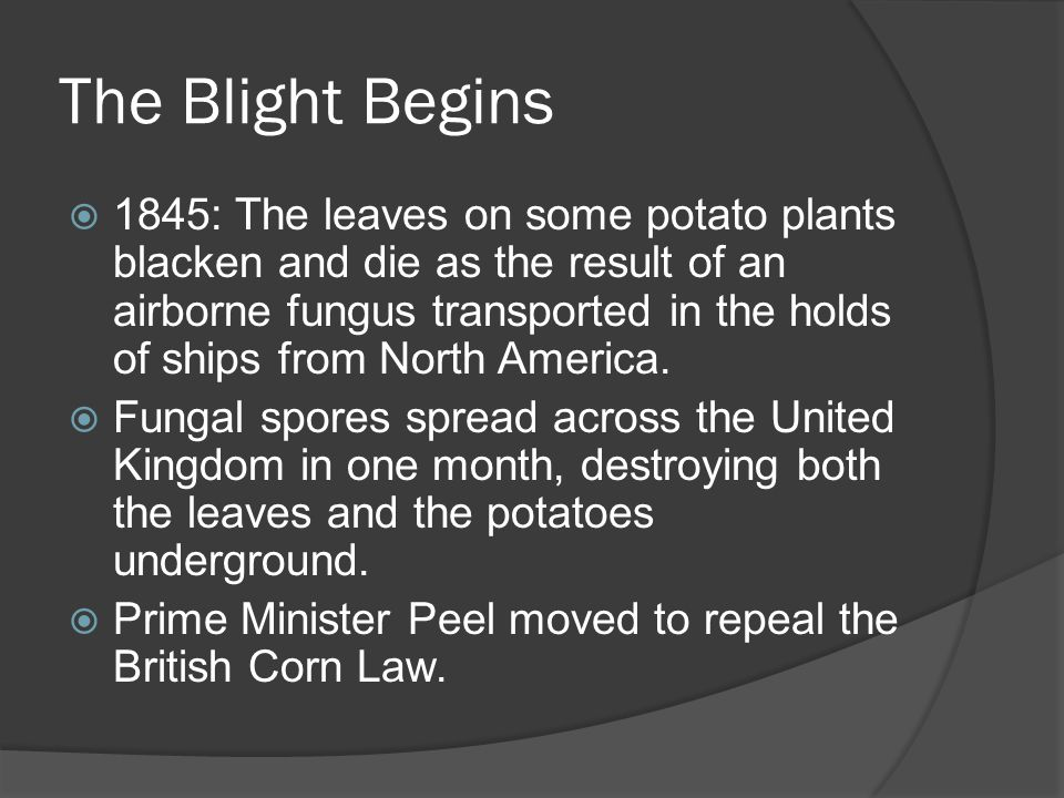 The Blight Begins (cont.)  The Corn Law kept the price of British Corn very high so that the British Farmers could enjoy the benefits of selling at those prices, but the Irish couldn't afford to buy the corn.