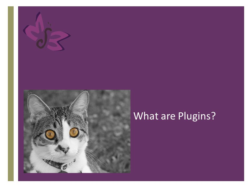 What are Plugins