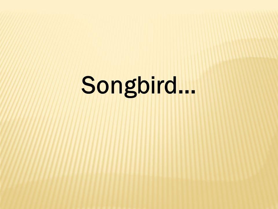 Songbird…