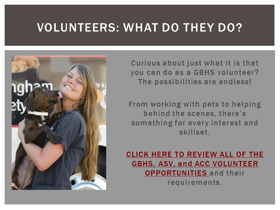 Curious about just what it is that you can do as a GBHS volunteer? The possibilities are endless! From working with pets to helping behind the scenes,