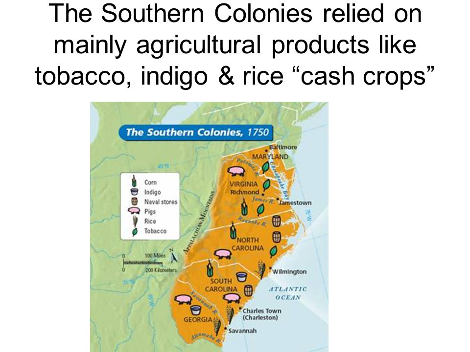 """The Southern Colonies relied on mainly agricultural products like tobacco, indigo & rice """"cash crops"""""""