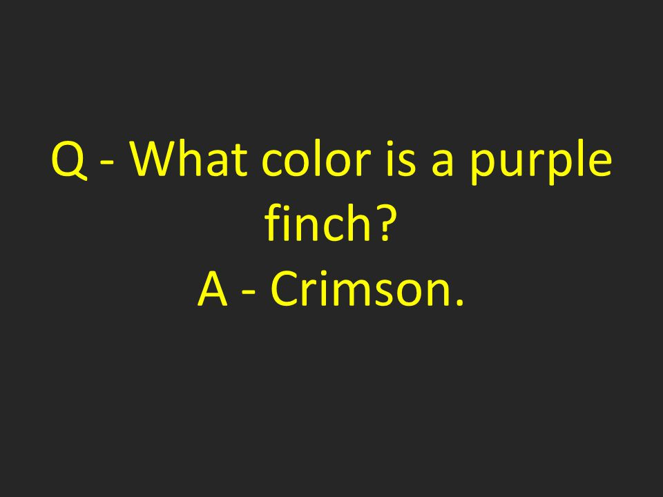 Q - What color is a purple finch A - Crimson.