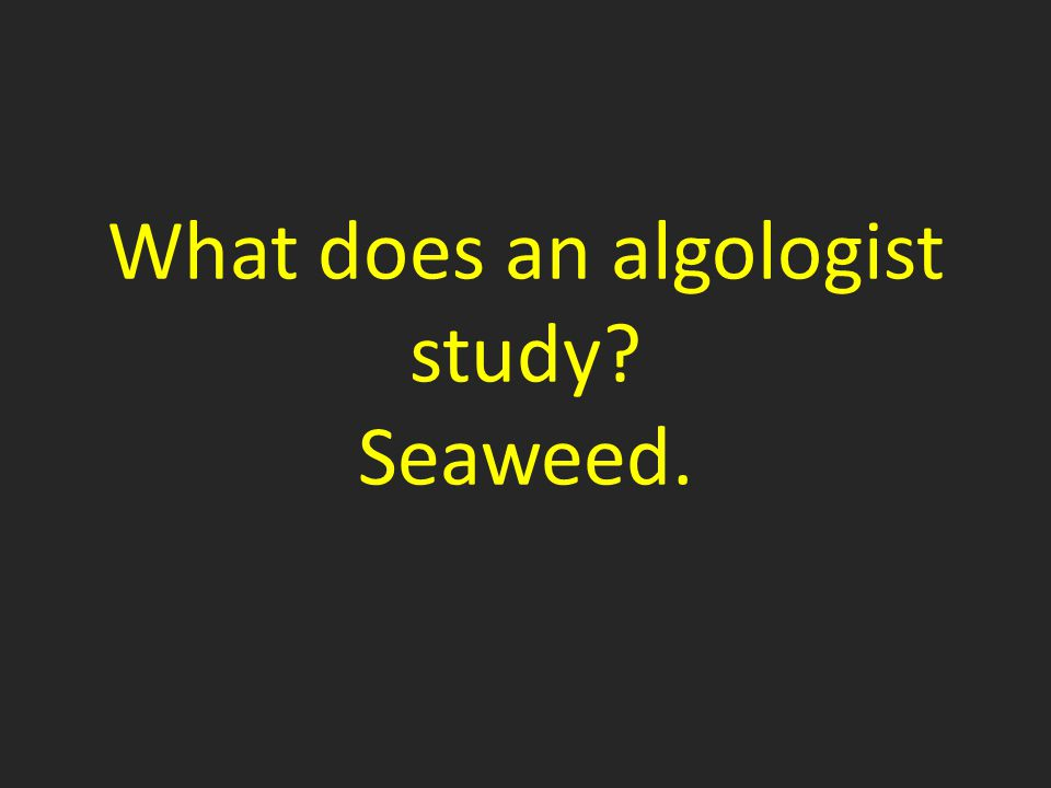 What does an algologist study Seaweed.