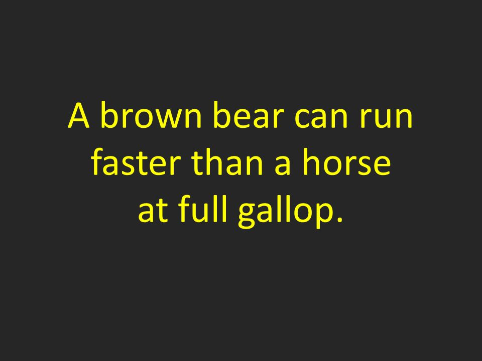 A brown bear can run faster than a horse at full gallop.
