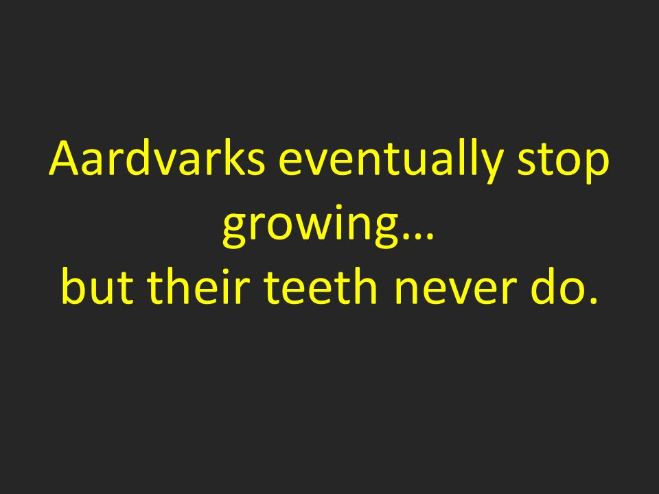 Aardvarks eventually stop growing… but their teeth never do.