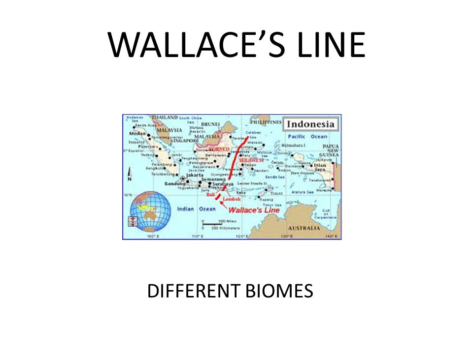 WALLACE'S LINE DIFFERENT BIOMES