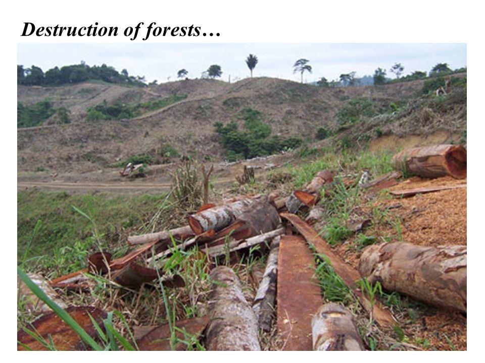 Destruction of forests…