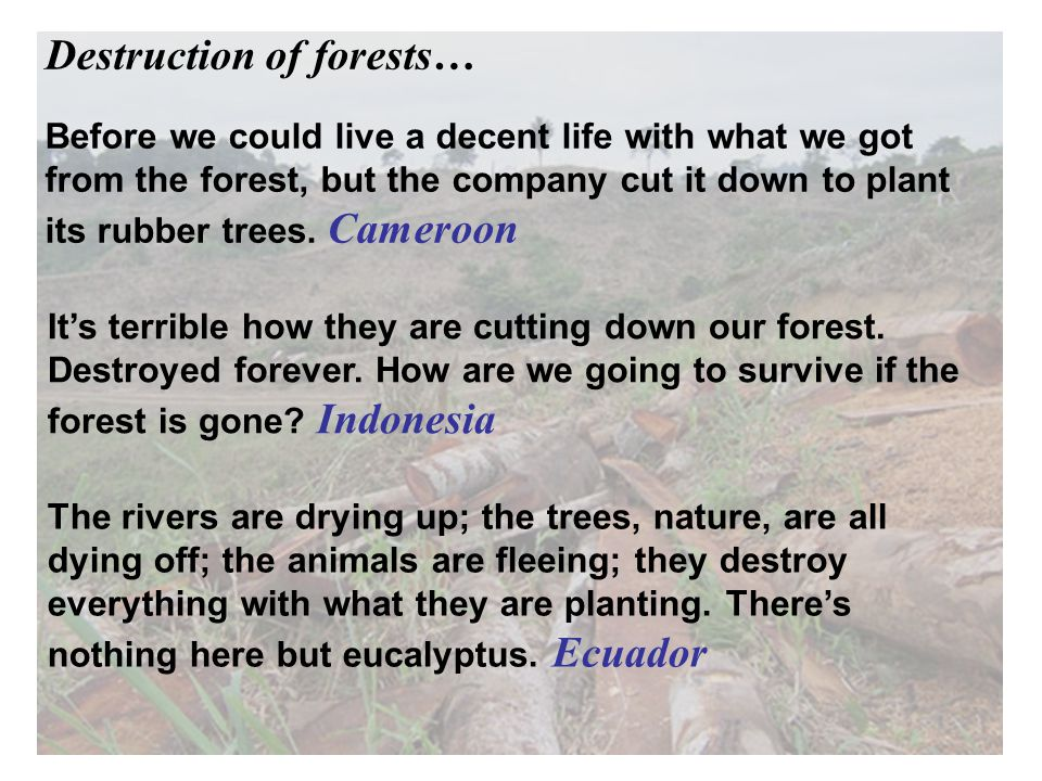 Before we could live a decent life with what we got from the forest, but the company cut it down to plant its rubber trees.