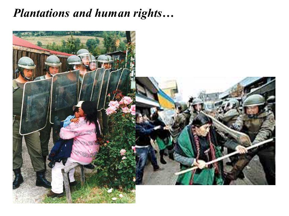 Plantations and human rights…