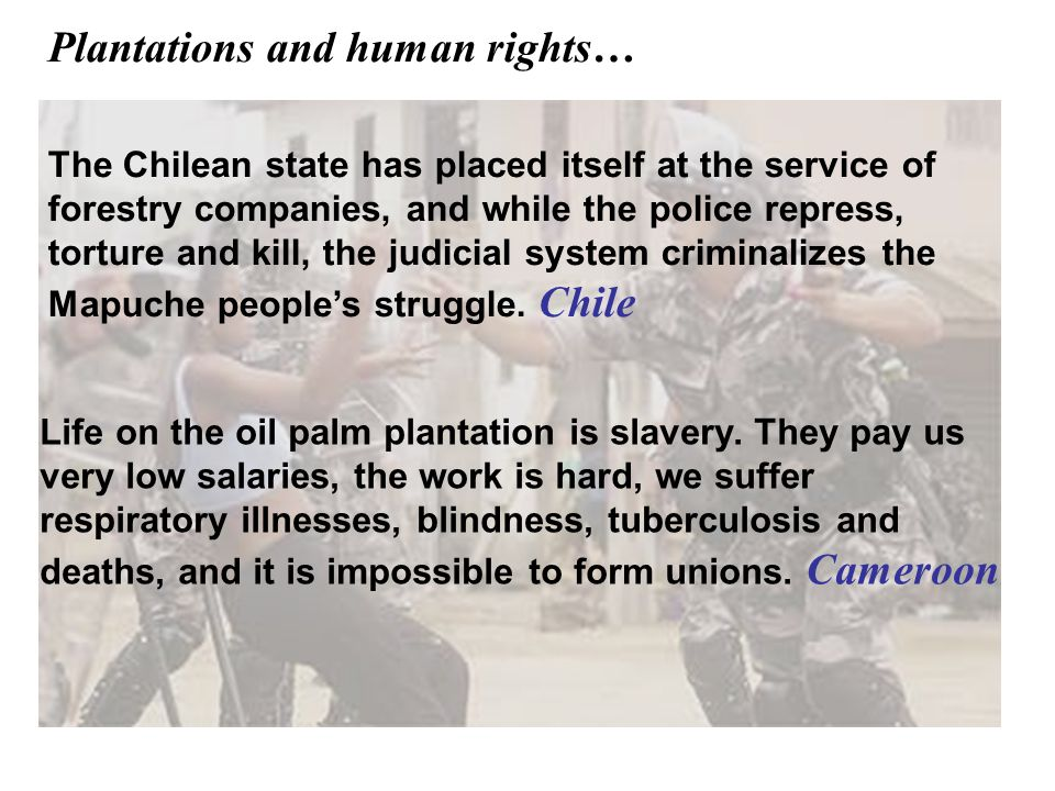The Chilean state has placed itself at the service of forestry companies, and while the police repress, torture and kill, the judicial system criminal