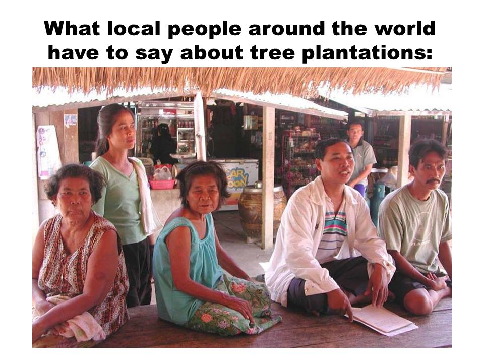 What local people around the world have to say about tree plantations: