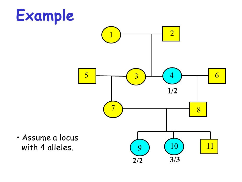 Example 1/2 2/2 3/3 5 3 46 1 2 7 8 9 1011 Assume a locus with 4 alleles.