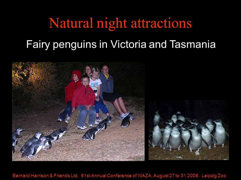 Bernard Harrison & Friends Ltd, 61st Annual Conference of WAZA, August 27 to 31 2006, Leipzig Zoo Natural night attractions Fairy penguins in Victoria and Tasmania