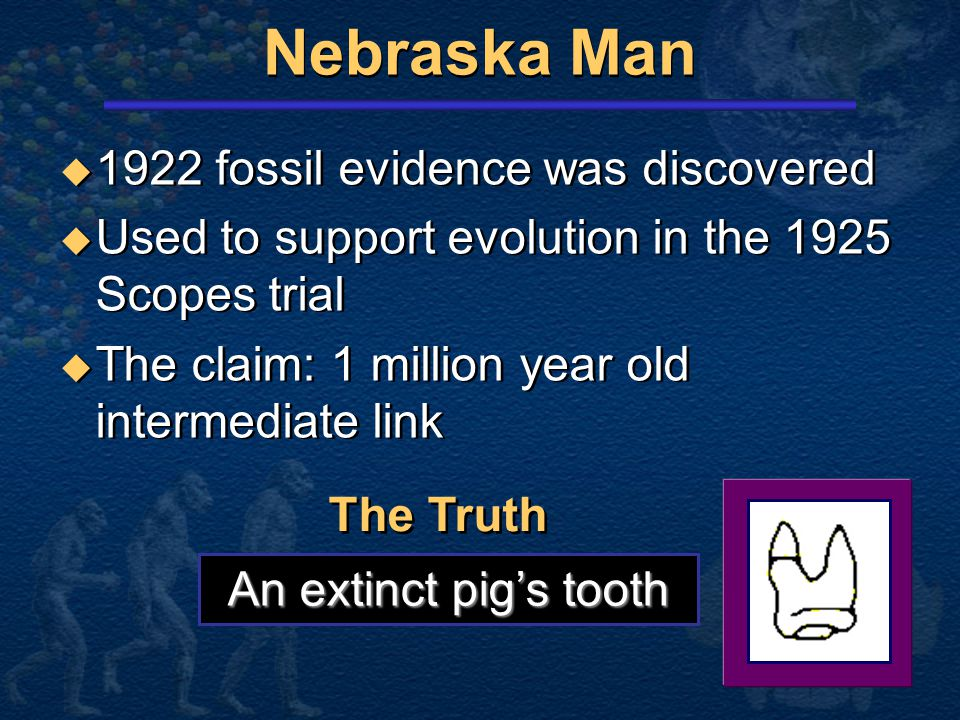 Conclusion About Neandertals  Protruding brow ridge  Stocky body build and short extremities  Isolated population of people  Lived in a cold, harsh climate  100% human  Protruding brow ridge  Stocky body build and short extremities  Isolated population of people  Lived in a cold, harsh climate  100% human Neandertal man, reconstructed from a skull found in La Chapelle-aux-Saints, France